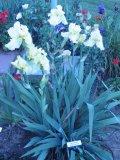 Kincaid Garden Markers 2